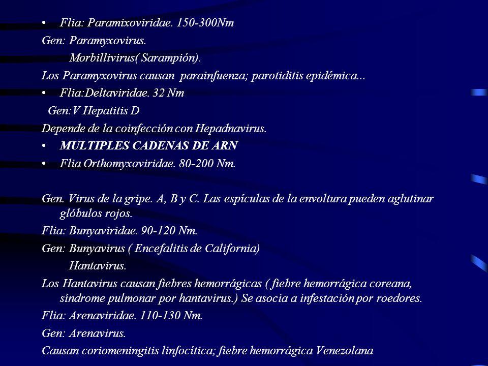 Flia: Paramixoviridae. 150-300Nm