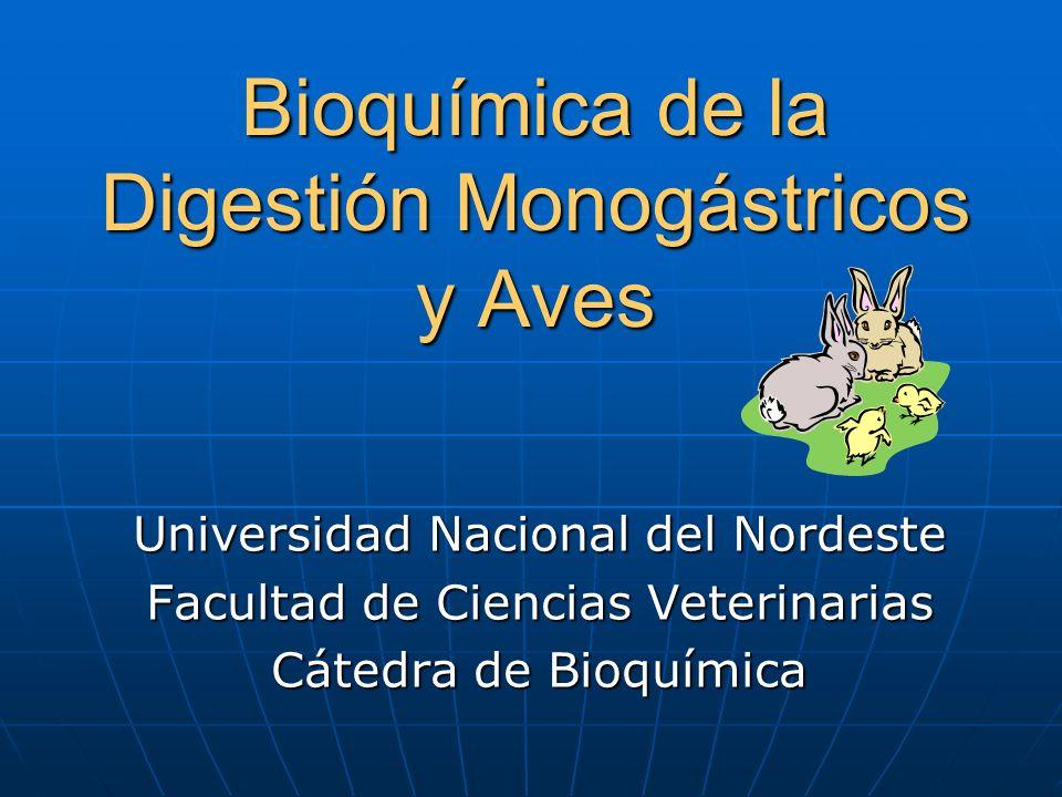 Bioquímica de la Digestión Monogástricos y Aves