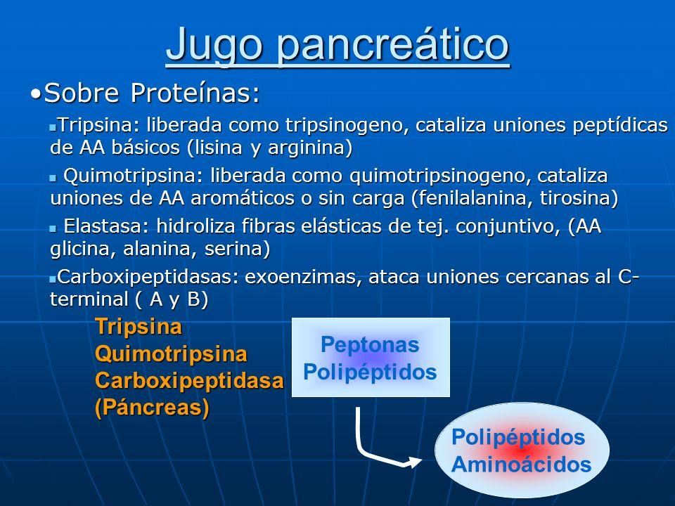 Jugo pancreático Sobre Proteínas: Polipéptidos Aminoácidos Peptonas