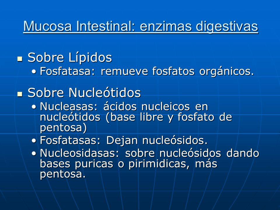 Mucosa Intestinal: enzimas digestivas