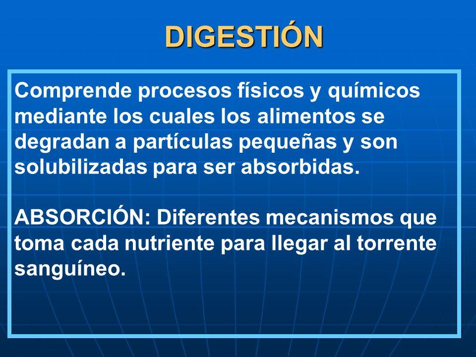DIGESTIÓN Comprende procesos físicos y químicos