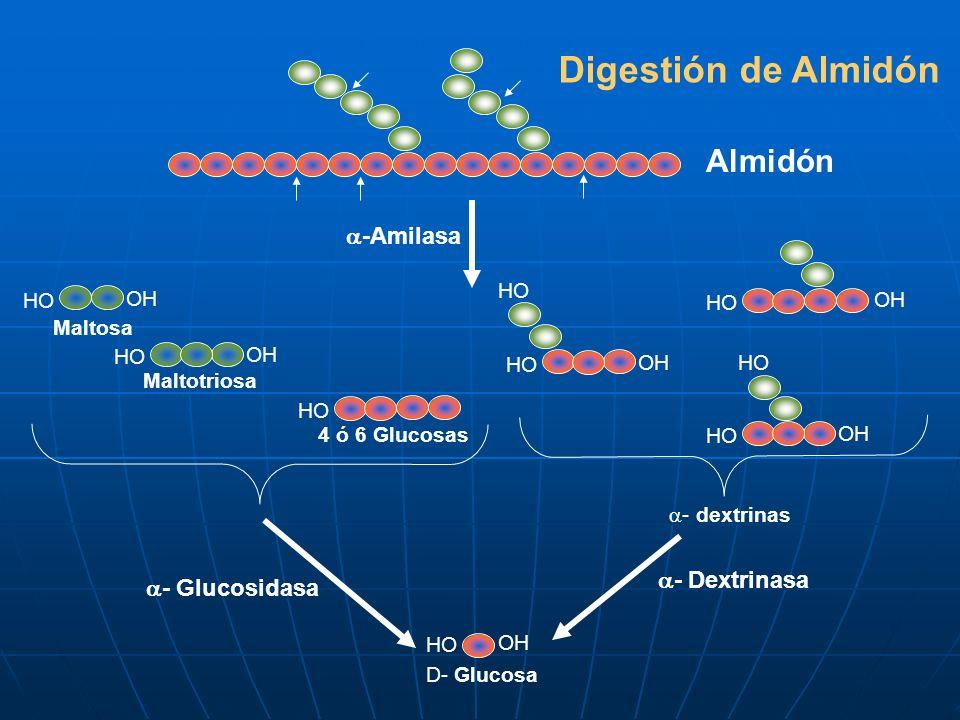 Digestión de Almidón Almidón -Amilasa - Dextrinasa - Glucosidasa HO