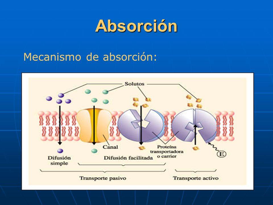Absorción Mecanismo de absorción: