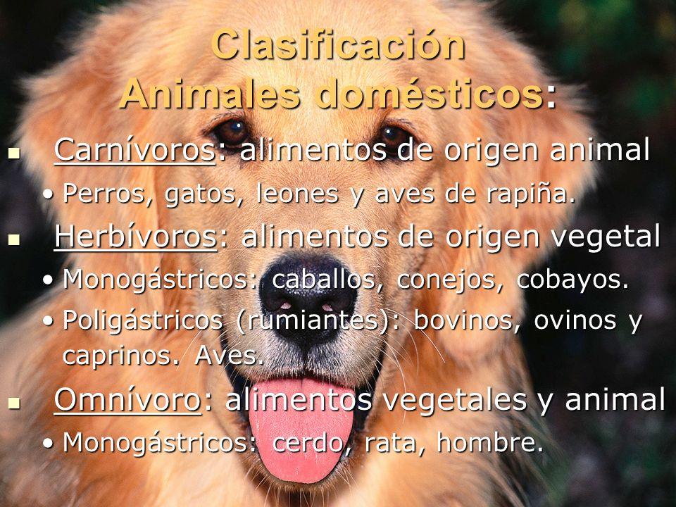 Clasificación Animales domésticos: