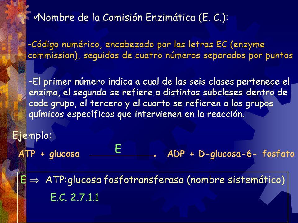 E Nombre de la Comisión Enzimática (E. C.): Ejemplo: