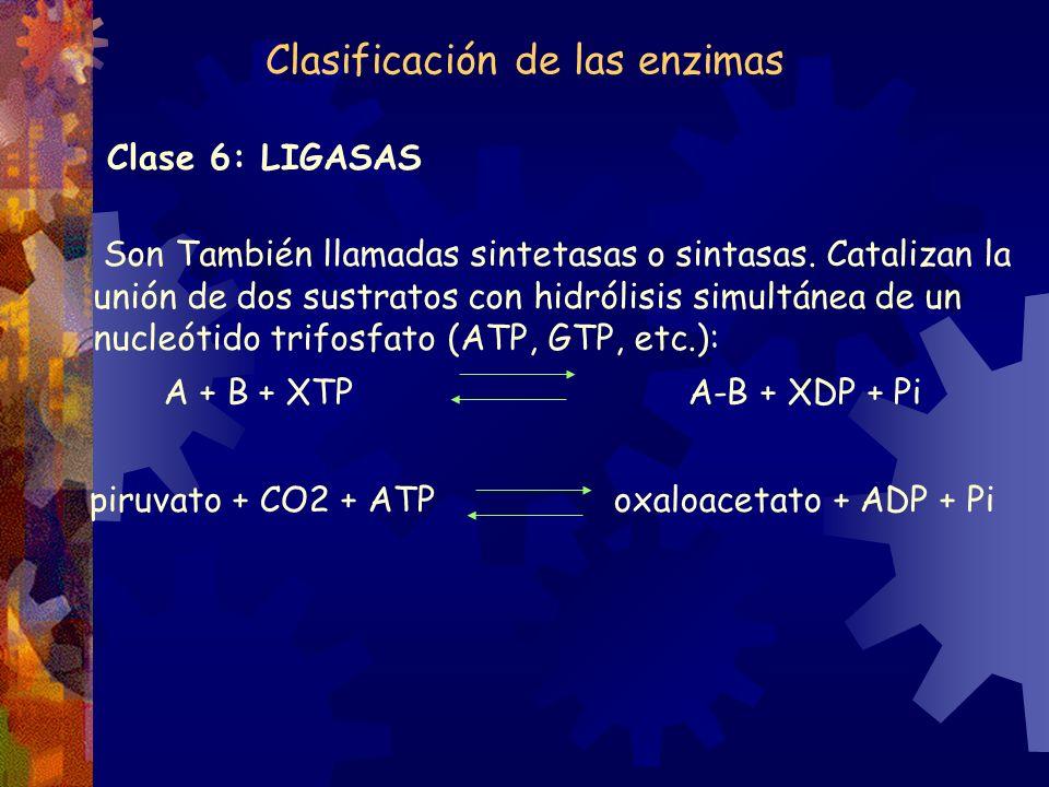 Clasificación de las enzimas