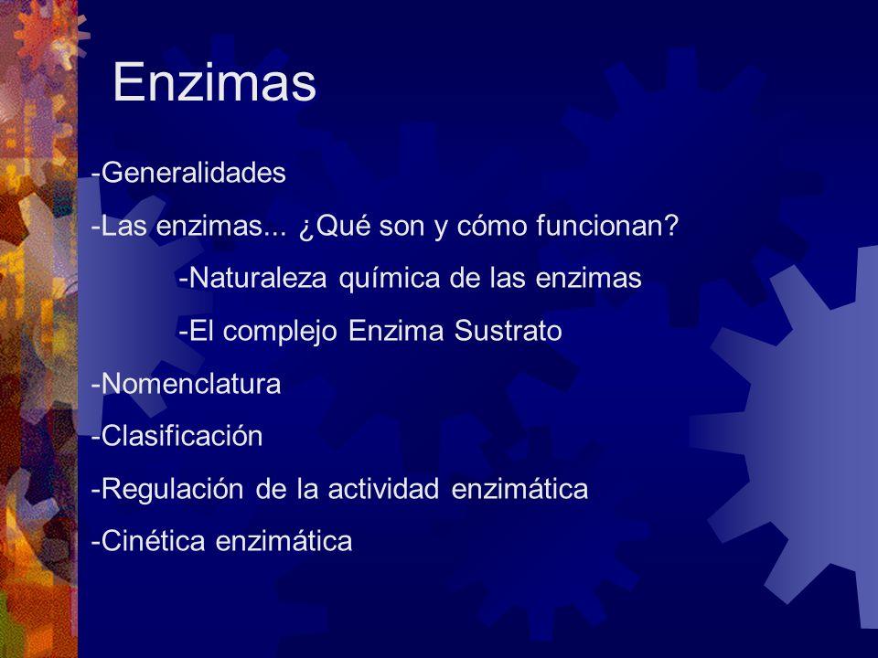 Enzimas Generalidades Las enzimas... ¿Qué son y cómo funcionan
