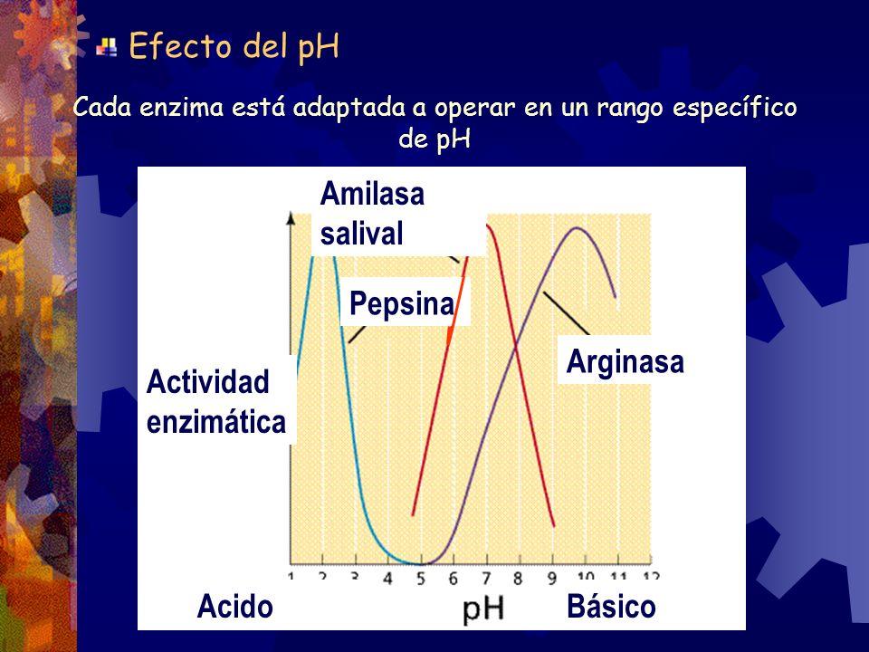 Cada enzima está adaptada a operar en un rango específico de pH