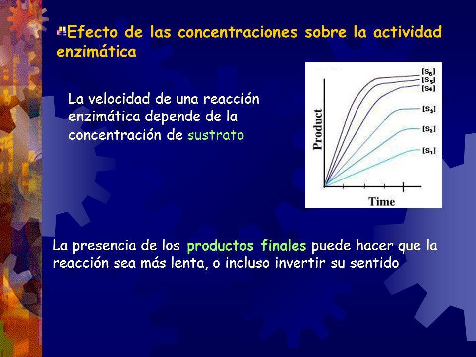 Efecto de las concentraciones sobre la actividad enzimática