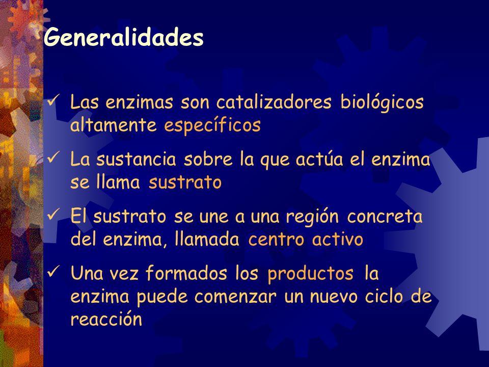 Generalidades Las enzimas son catalizadores biológicos altamente específicos. La sustancia sobre la que actúa el enzima se llama sustrato.