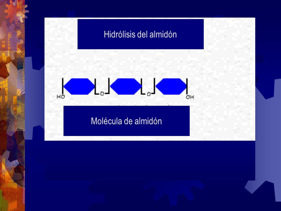 Hidrólisis del almidón