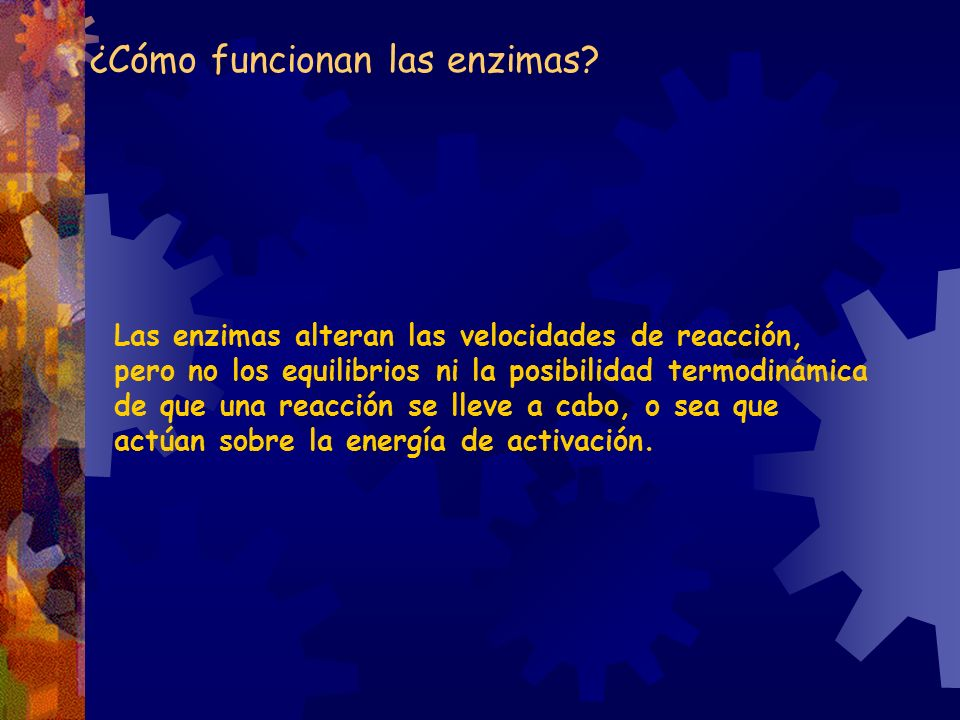 ¿Cómo funcionan las enzimas