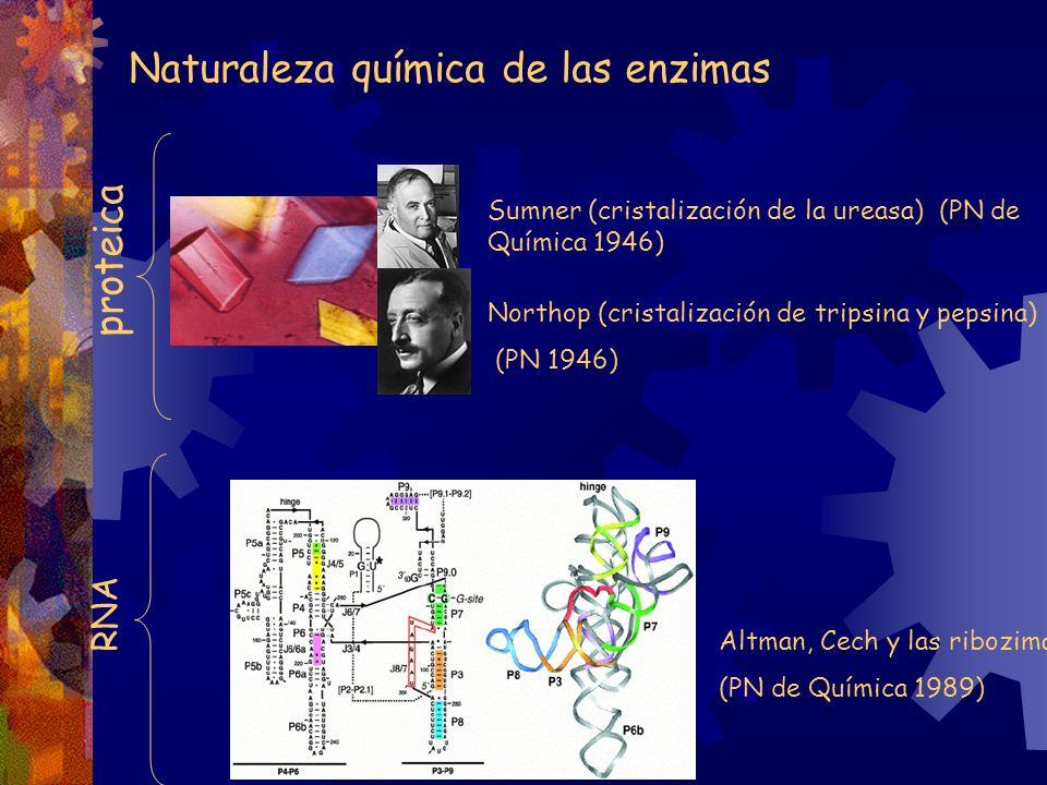 Naturaleza química de las enzimas