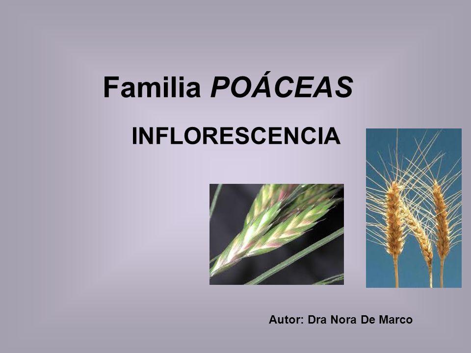 Autor: Dra Nora De Marco