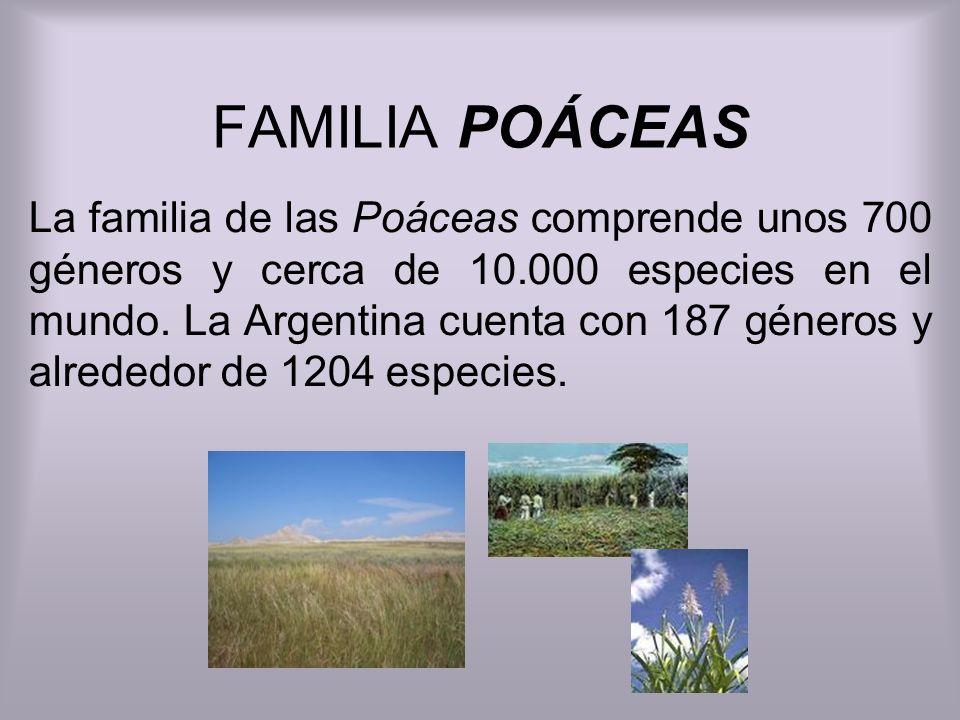 FAMILIA POÁCEAS