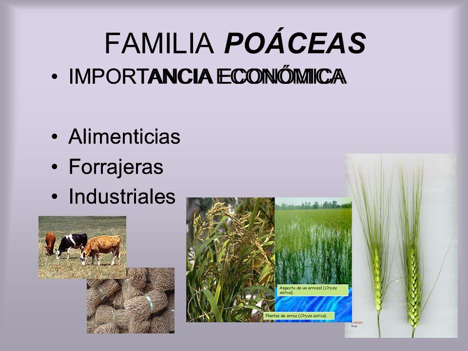 FAMILIA POÁCEAS IMPORTANCIA ECONÓMICA Alimenticias Forrajeras
