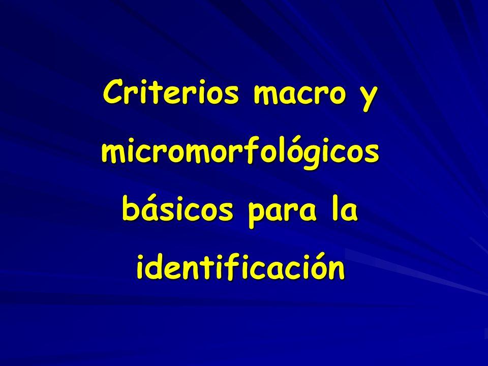 Criterios macro y micromorfológicos básicos para la identificación