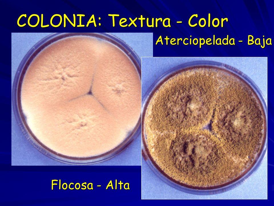 COLONIA: Textura - Color