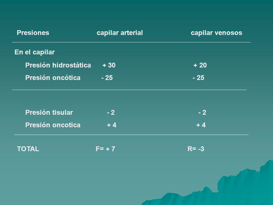 Presiones capilar arterial capilar venosos