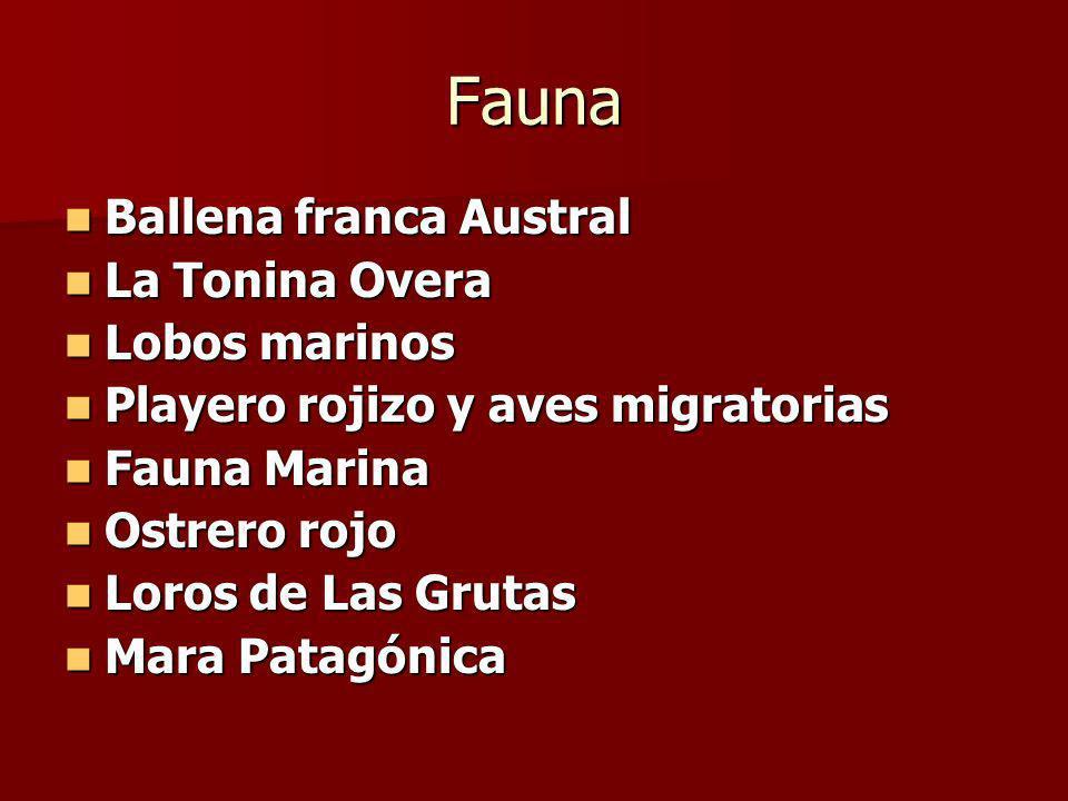 Fauna Ballena franca Austral La Tonina Overa Lobos marinos