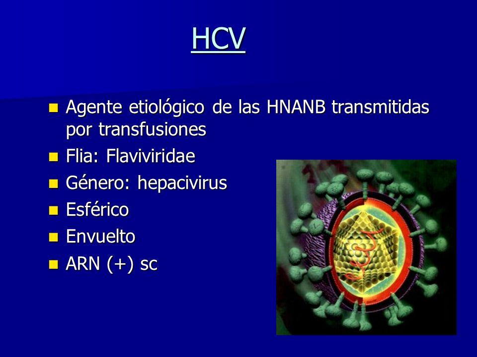 HCV Agente etiológico de las HNANB transmitidas por transfusiones