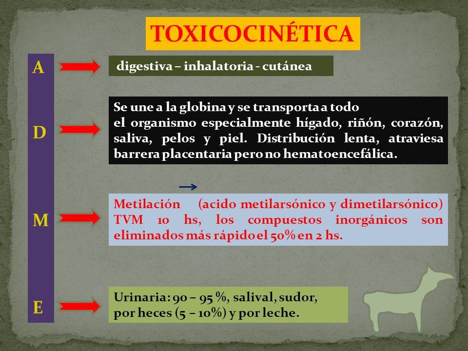 TOXICOCINÉTICA A D M E digestiva – inhalatoria - cutánea