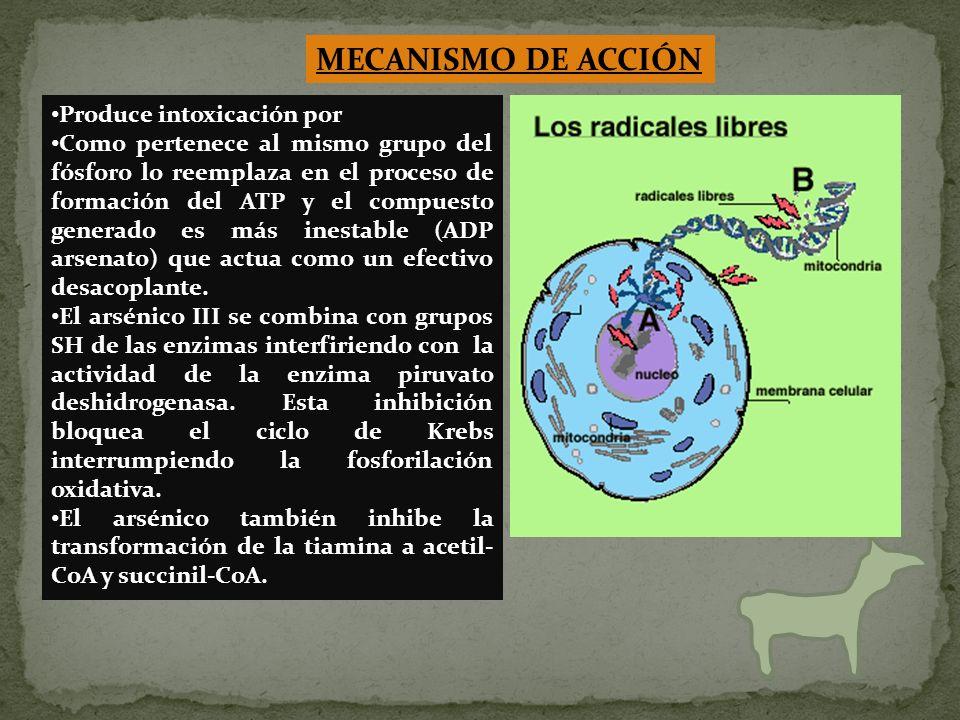 MECANISMO DE ACCIÓN Produce intoxicación por