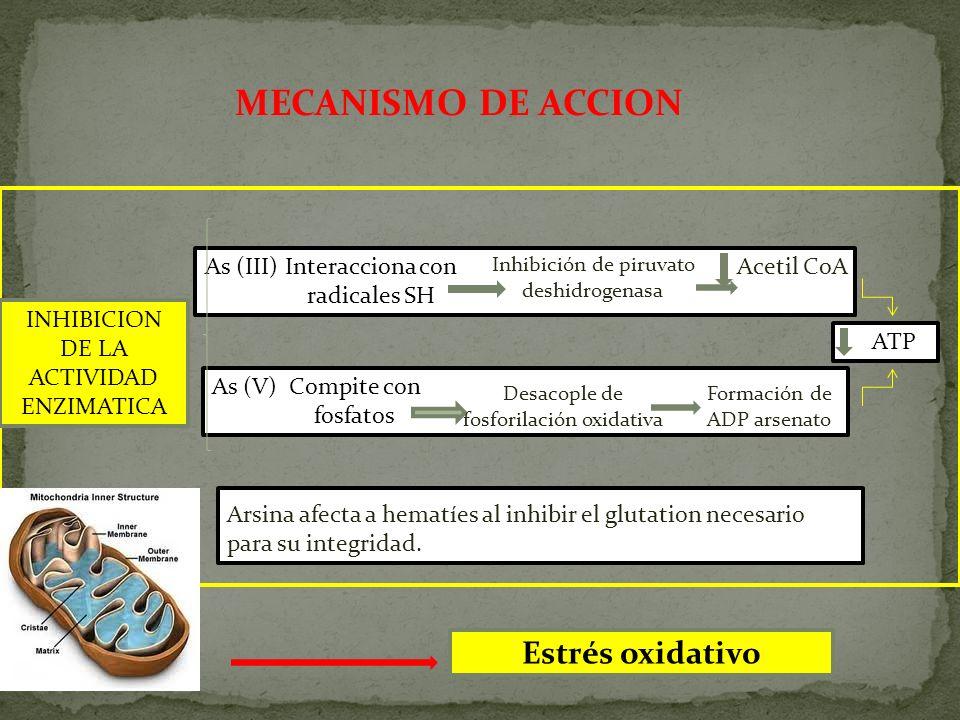 MECANISMO DE ACCION Estrés oxidativo As (III) Interacciona con