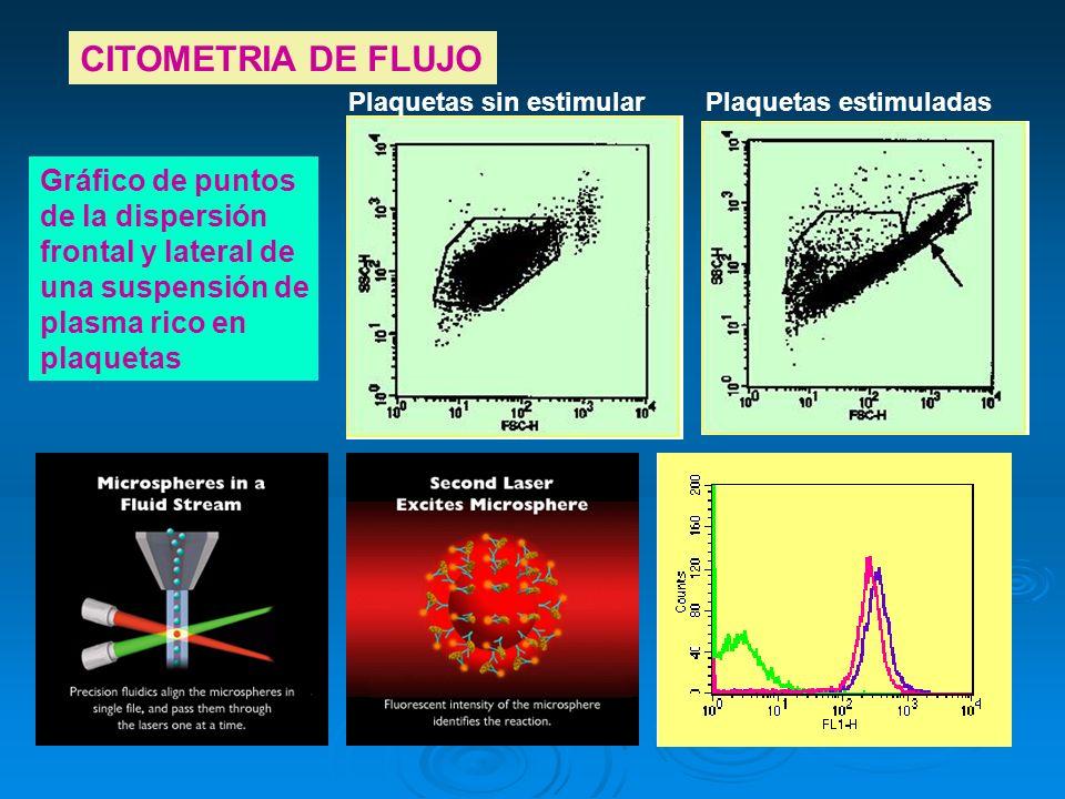 CITOMETRIA DE FLUJO Gráfico de puntos de la dispersión