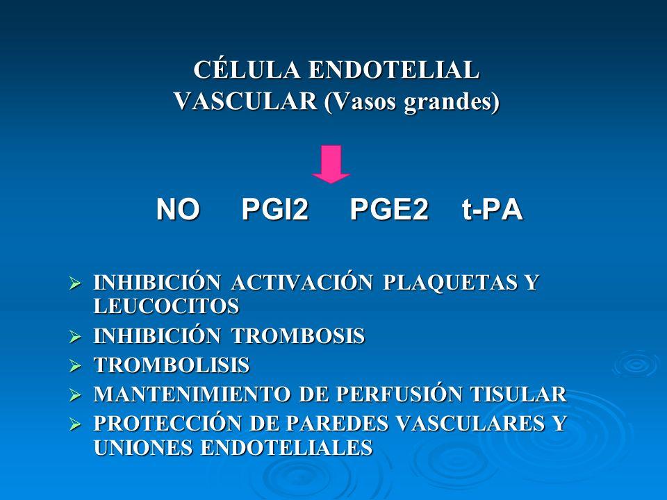 CÉLULA ENDOTELIAL VASCULAR (Vasos grandes)