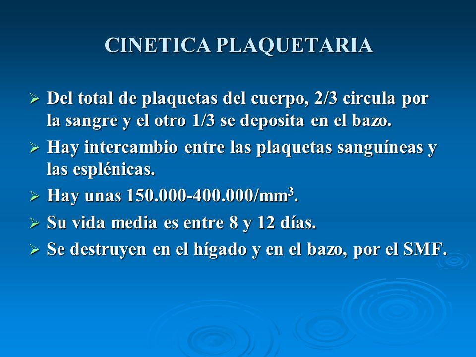 CINETICA PLAQUETARIADel total de plaquetas del cuerpo, 2/3 circula por la sangre y el otro 1/3 se deposita en el bazo.