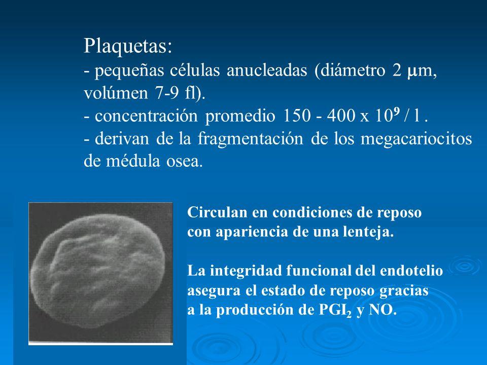 Plaquetas: - pequeñas células anucleadas (diámetro 2 m,