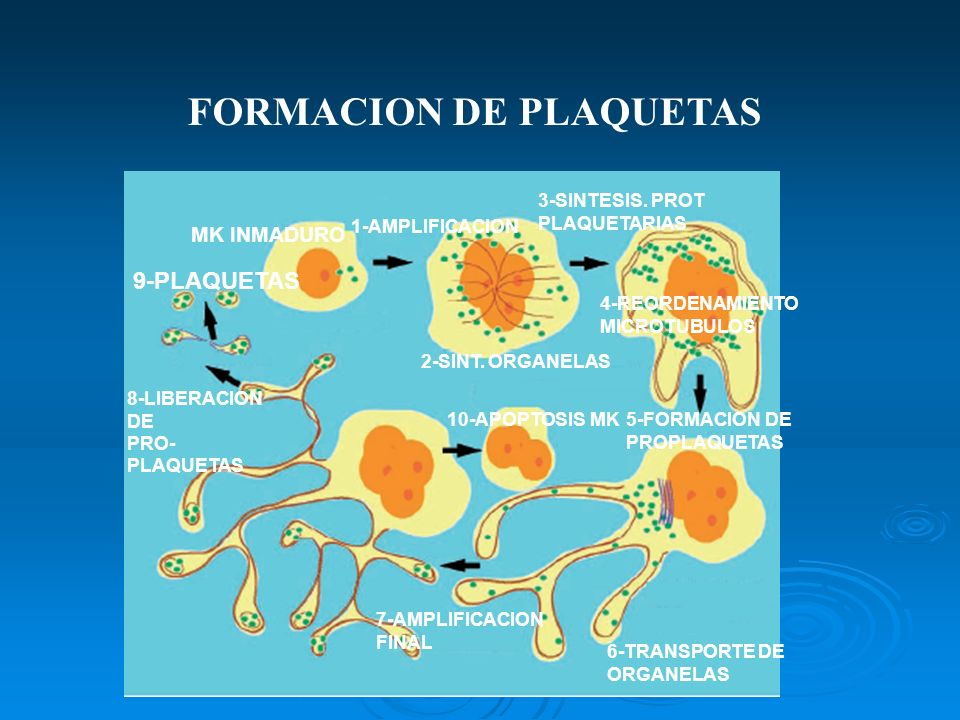 FORMACION DE PLAQUETAS