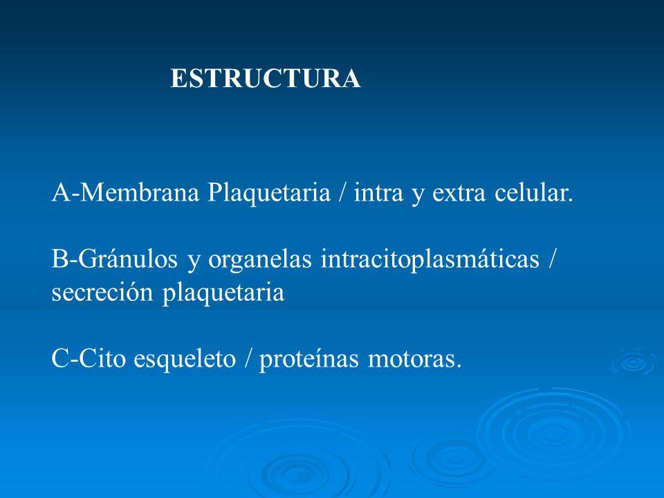 ESTRUCTURA A-Membrana Plaquetaria / intra y extra celular. B-Gránulos y organelas intracitoplasmáticas / secreción plaquetaria.