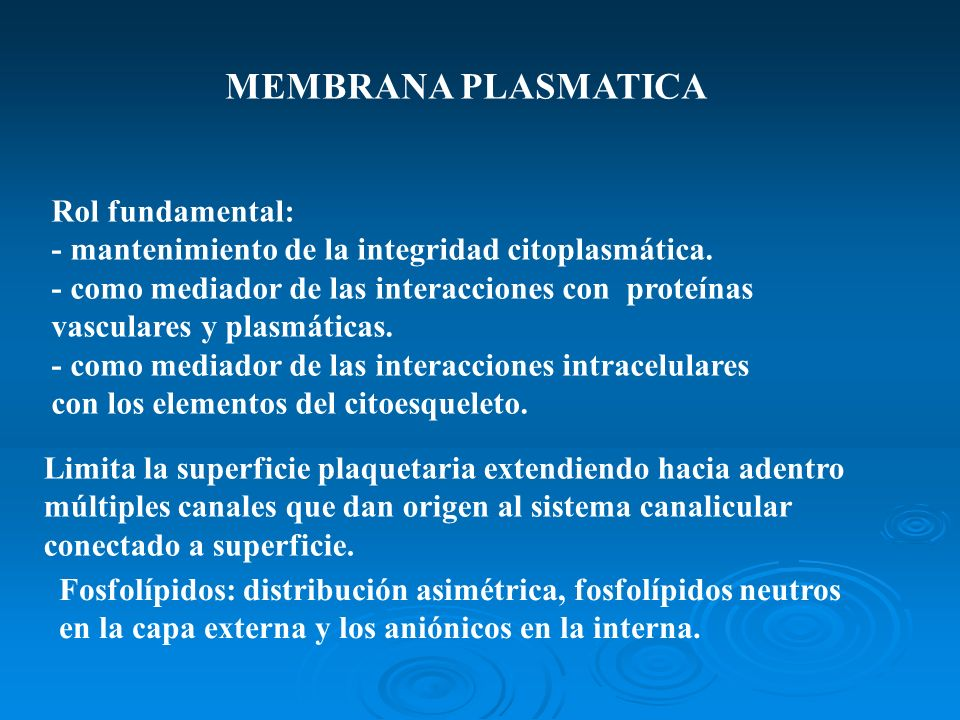 MEMBRANA PLASMATICA Rol fundamental: