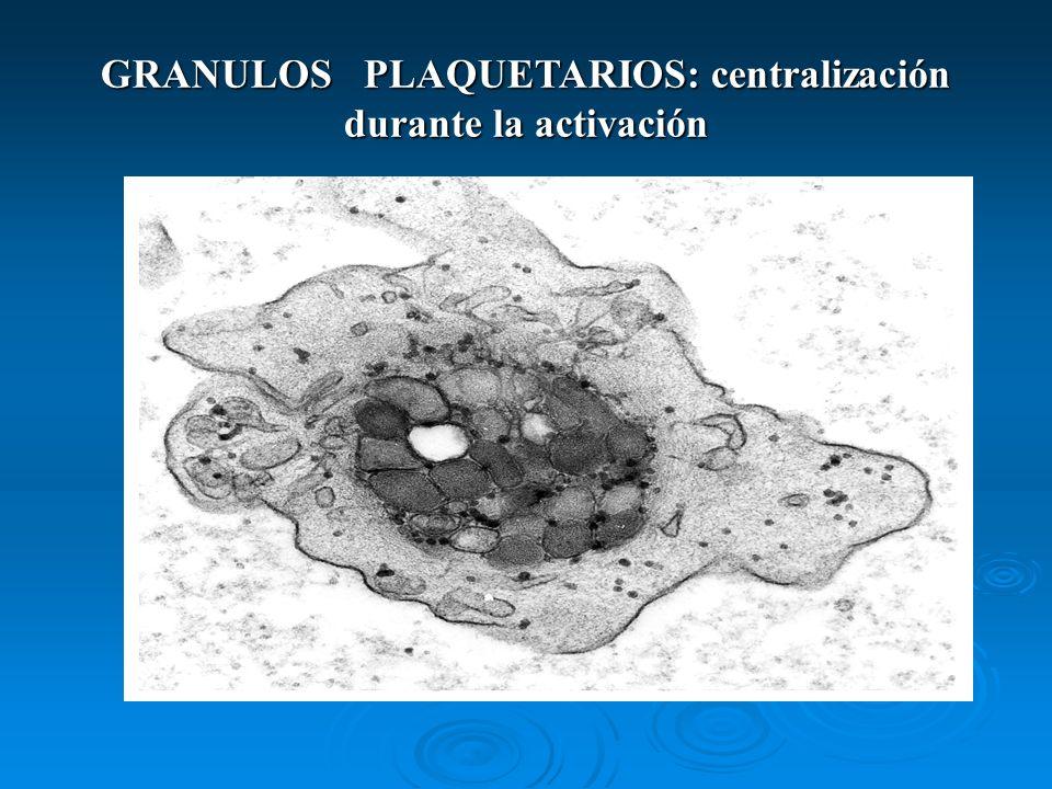 GRANULOS PLAQUETARIOS: centralización durante la activación