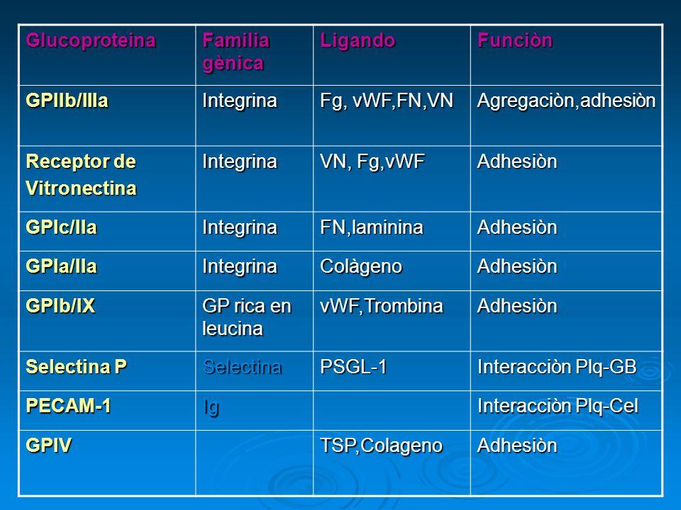 Glucoproteina Familia gènica. Ligando. Funciòn. GPIIb/IIIa. Integrina. Fg, vWF,FN,VN. Agregaciòn,adhesiòn.