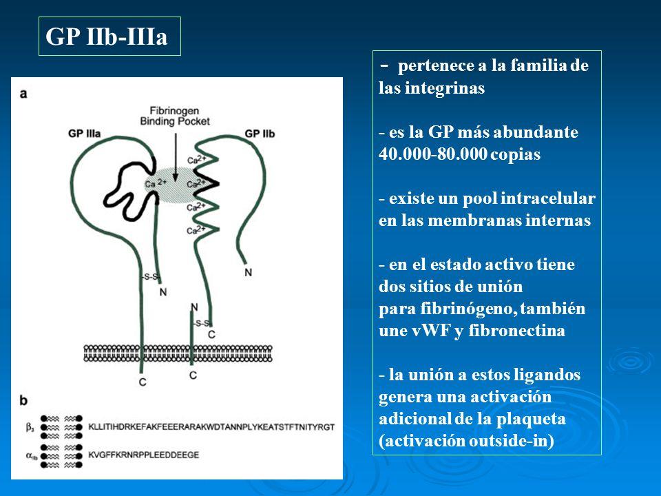 GP IIb-IIIa - pertenece a la familia de las integrinas