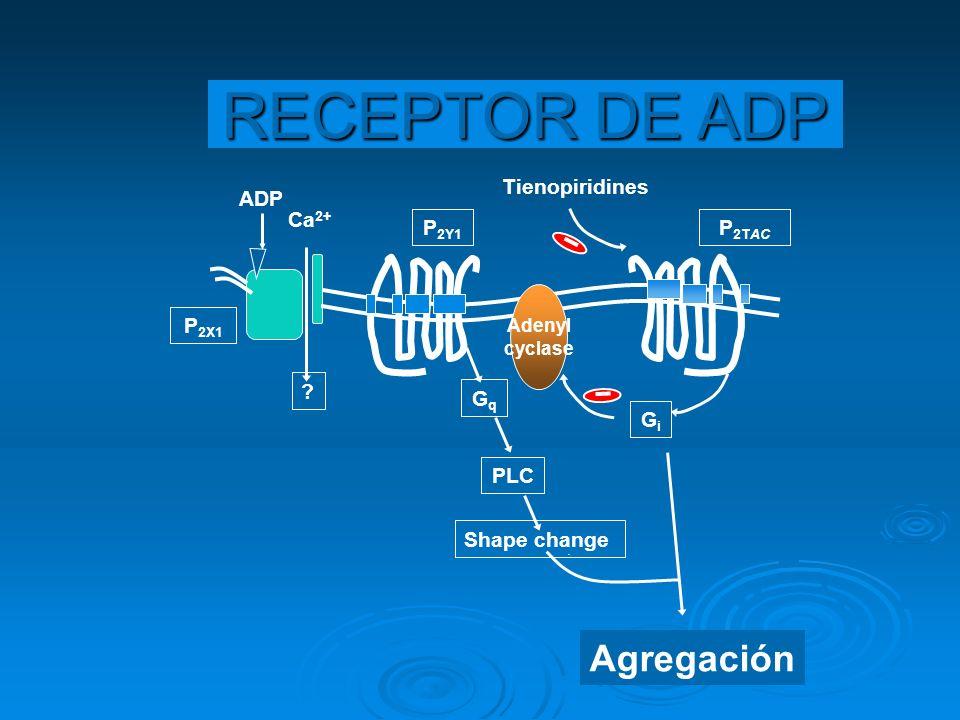 RECEPTOR DE ADP Agregación Tienopiridines ADP Ca2+ P2Y1 P2TAC P2X1