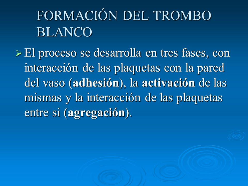 FORMACIÓN DEL TROMBO BLANCO