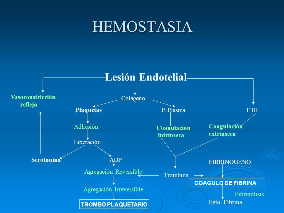 HEMOSTASIA Lesión Endotelial Colágeno Vasoconstricción refleja