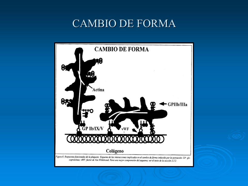 CAMBIO DE FORMA