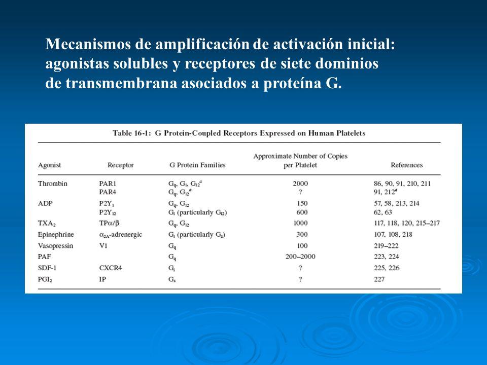 Mecanismos de amplificación de activación inicial: