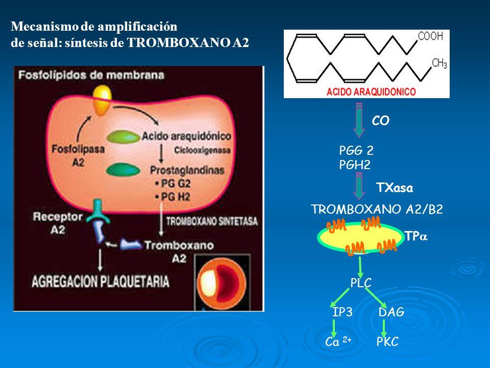 Mecanismo de amplificación de señal: síntesis de TROMBOXANO A2