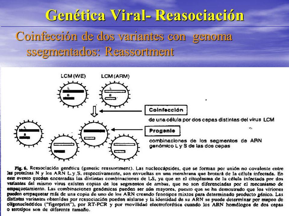 Genética Viral- Reasociación