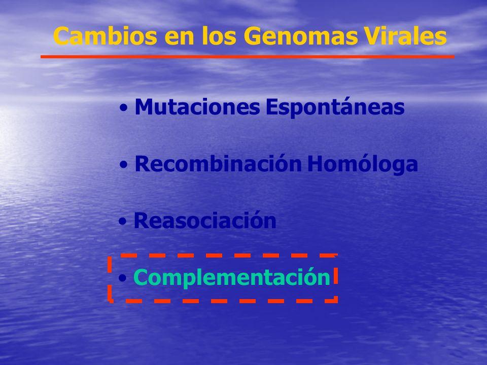 Cambios en los Genomas Virales