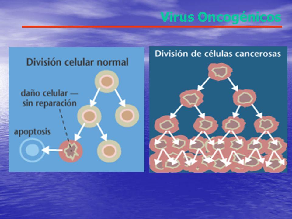 Virus Oncogénicos