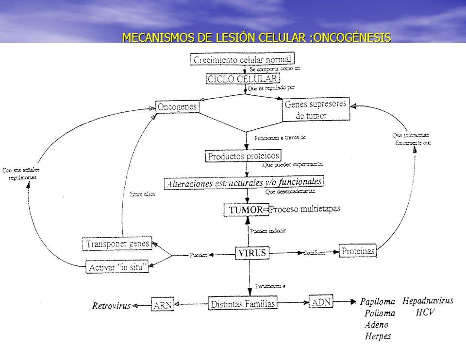 MECANISMOS DE LESIÓN CELULAR :ONCOGÉNESIS