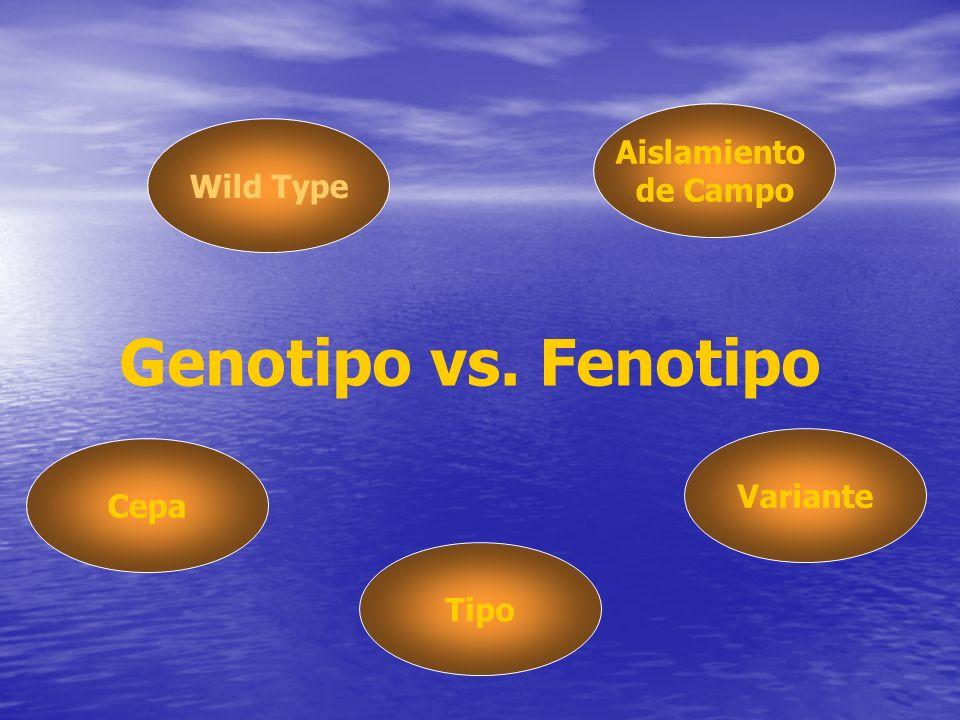 Genotipo vs. Fenotipo Aislamiento de Campo Wild Type Variante Cepa