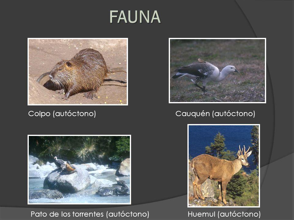 FAUNA Coipo (autóctono) Cauquén (autóctono)